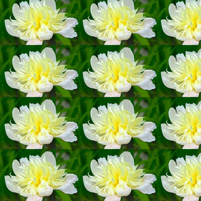Peolooni Flower