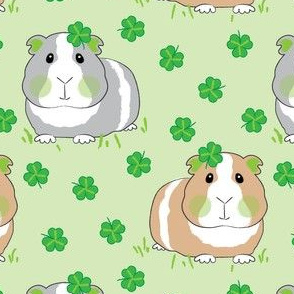 guinea-pigs-with-shamrocks