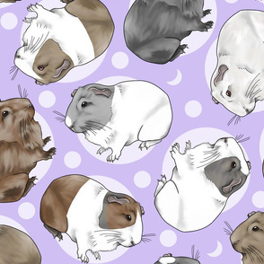 Guinea pigs and moon dots - large purple