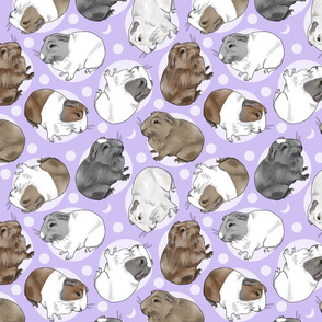 Guinea pigs and moon dots - medium purple
