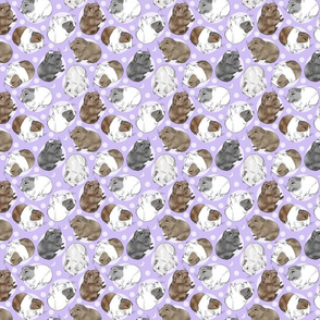 Guinea pigs and moon dots - small purple