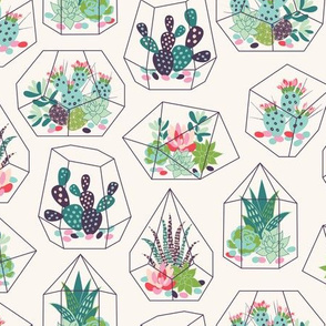 succulents and cactuses with inky texture in glass terrariums