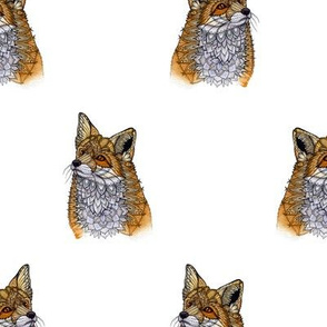 Fox Portraits