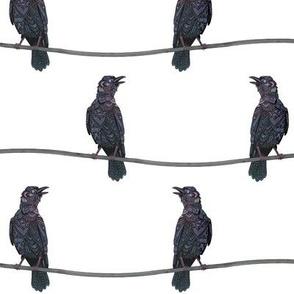 Verklempt Crows