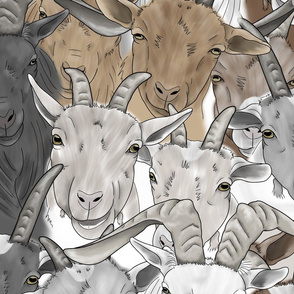 Goat herd faces - large
