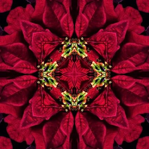 Red Poinsettias Abstract 4
