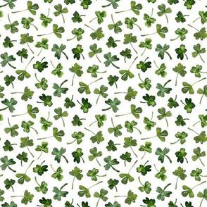 green shamrock leaves