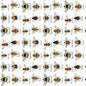 I'm going on a bee hunt // orientated for tea towels