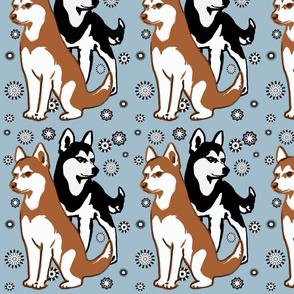 double colors siberian husky