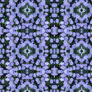 IMG_2672 Petunia Profusion