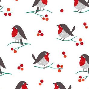 Christmas robin on white