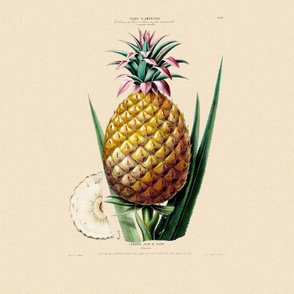 Welcoming Pineapple Pilllow Square ~ Vanille parchment
