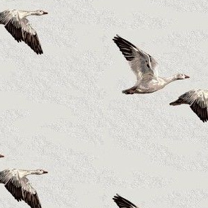 Wild Snow Geese Pair - Light Gray - Small scale