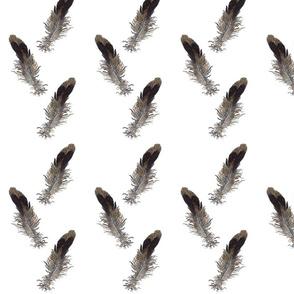 Small Bird Feathers
