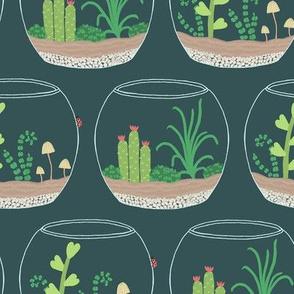 Terrariums, Cactus and Succulents