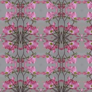 IMG_8617  Dogwood Blossoms