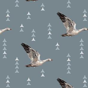 SNOW NOMAD - Migratory Snow Goose - Dk Blue - Large Scale