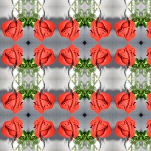 IMG_1387  San Francisco Rose