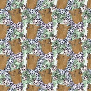 Floral Silky Terrier portraits