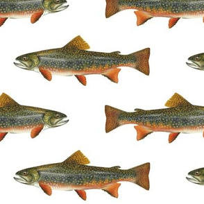 brook trout on white
