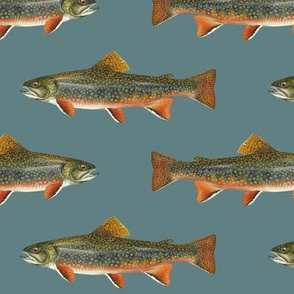brook trout on slate blue
