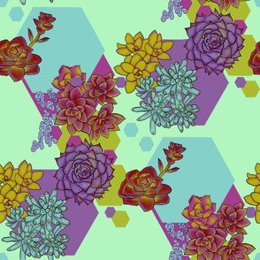 Succulents and Hexagons