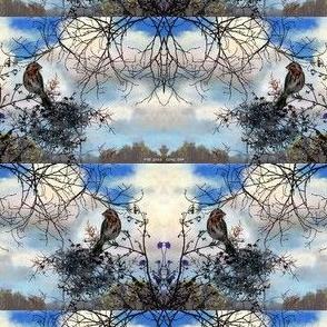 jack_sparrow_little_bird