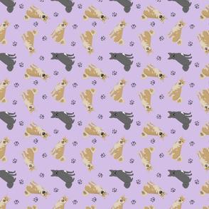 Tiny Norwegian Buhunds - purple