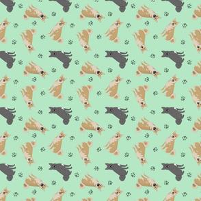Tiny Norwegian Buhunds - green