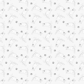Tiny White Shepherd dogs - gray