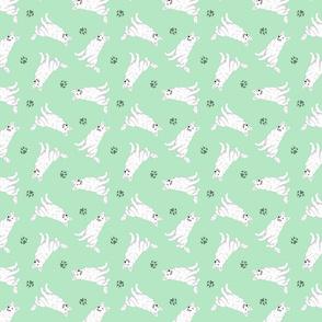 Tiny White Shepherd dogs - green