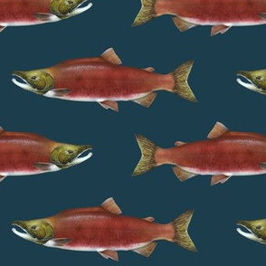 sockeye salmon on 1d3d4c navy