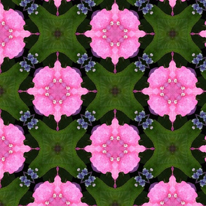 Pink Hydrangea repeat