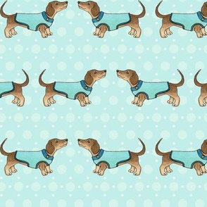 Dachshunds in coats on blue
