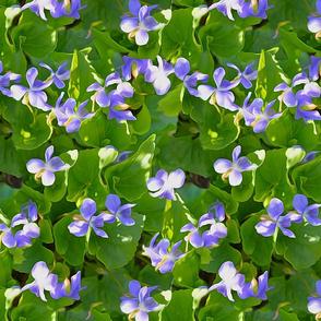 Violas Purple repeat