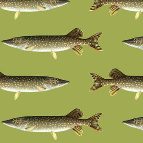 northern pike on golden green