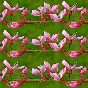 Barbed Pink Strain Clematis