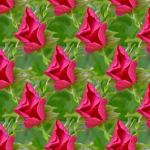 New Red Rose Bloom Flower