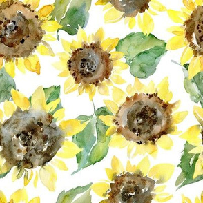 Watercolor sunflowers on white background