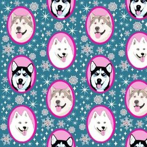 Husky Dog sled team // Husky, Samoyed and Malamute dogs