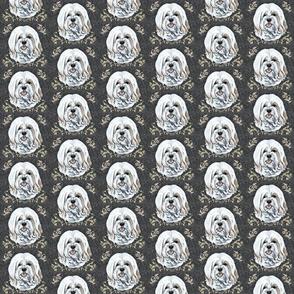 havanese dog  portrait with embellishments