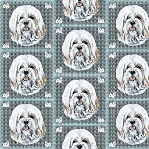 Havanese dog  on outline background