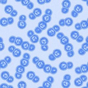 07058624 : streptococcus : Ab