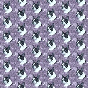 boston terrier dog on mauve marble sm