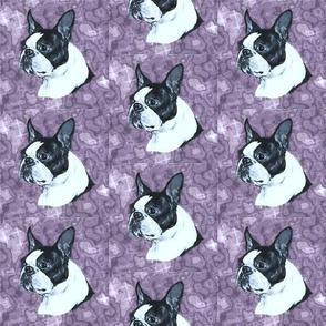boston terrier dog head on mauve marble