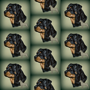 rotweiler dog