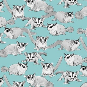 Black and White Sugar Gliders on Blue