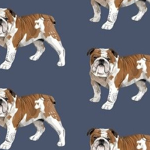 English Bulldog - Larger Size