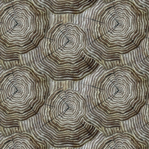 Tree Rings II