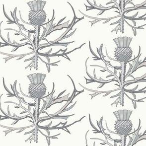 Scottish Garden Thistle, Cream  Grey